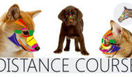 Pet Reflex Therapy Distance Course