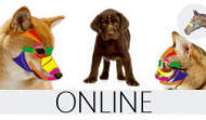Pet Reflex Therapy Online Course