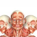 muscles skeleton thumbnail